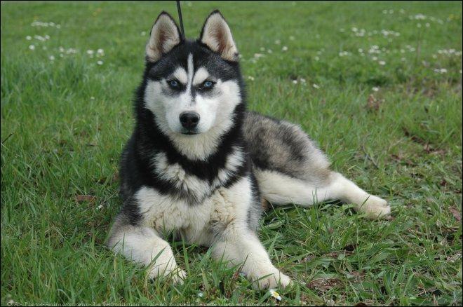 Quelle race de chiens est-ce ?