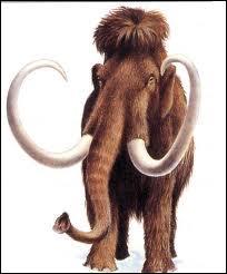 De quel animal actuel le mammouth est-il l'ancêtre ?
