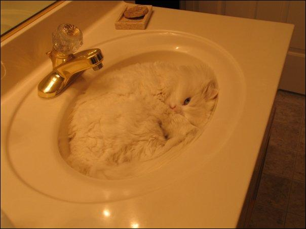 Dans quelle chanson paillarde française peut-on entendre : Chat, petit chat, chat tu m'égratignes --- Petit polisson, tu m'égratignes les ...
