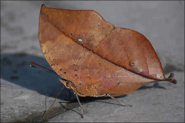 Cet insecte se repose, allez-vous l'identifier ?