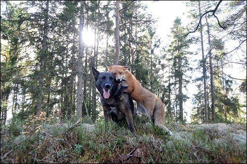 Ces deux chiens ont été élevés ensemble, ils s'adorent !