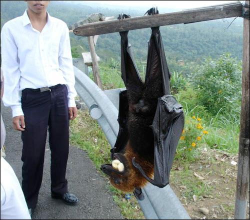 Cette photo a été prise durant un canular de Rémi Gaillard, déguisé en chauve-souris !