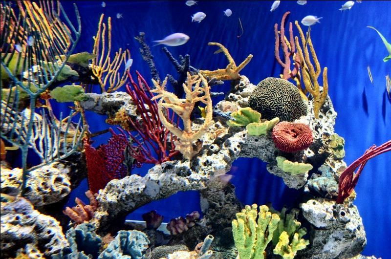 En dehors des poissons, il y a d'autres animaux sur cette vue sous-marine !