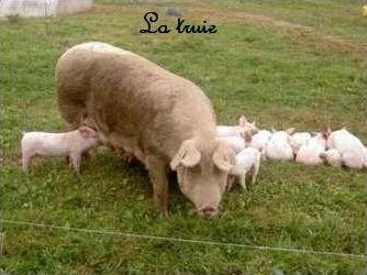 Quiz des animaux de la ferme