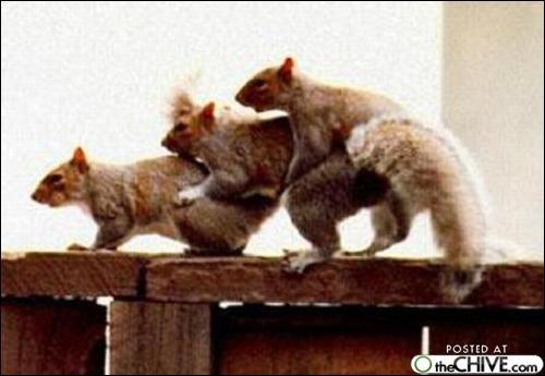 Chez cette espèce d'écureuil, c'est le mâle qui s'occupe des oeufs !