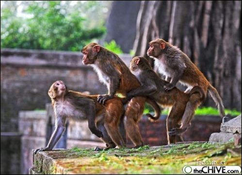Dans quel pays peut-on voir des temples consacrés au Dieu-singe Hanuman !