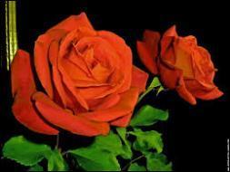 Quel film vous inspire cette rose ?