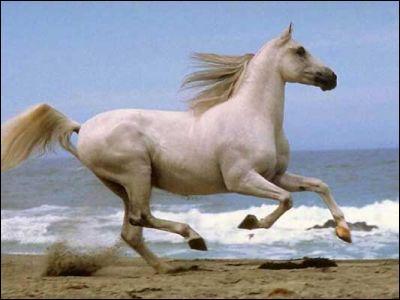 Quelle est environ la vitesse d'un cheval au galop ?