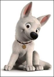 Quel est ce petit chien ?