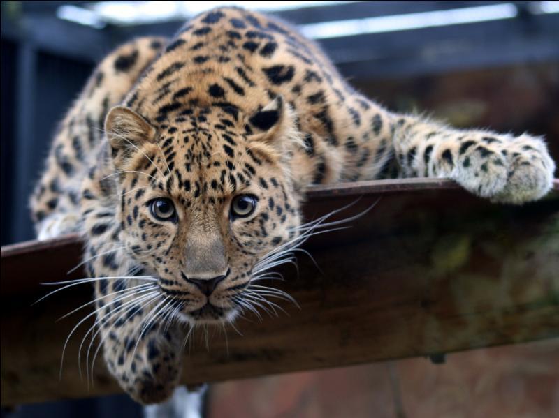 Imaginez-vous dans la peau de cet animal, quel serait votre jeu préféré ?