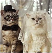 Vive les mariés ! Notre sacré rigolo qu'est Coluche disait  Mesdames, un conseil. Si vous cherchez un homme beau, riche et intelligent :
