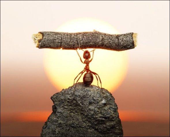 Une fourmi peut porter 500 fois son poids sur son dos !