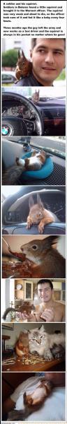 Il est facile à reconnaître, c'est l'écureuil roux européen !