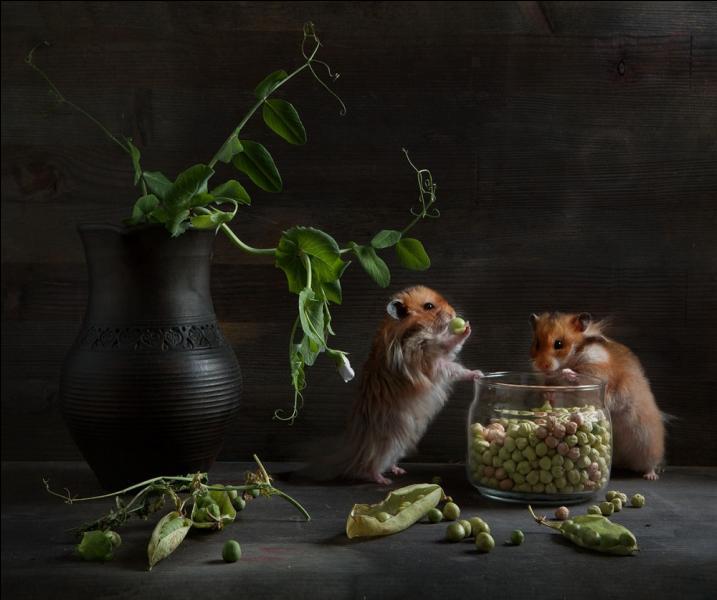 Sur cette photo, deux mulots sont en train de manger !