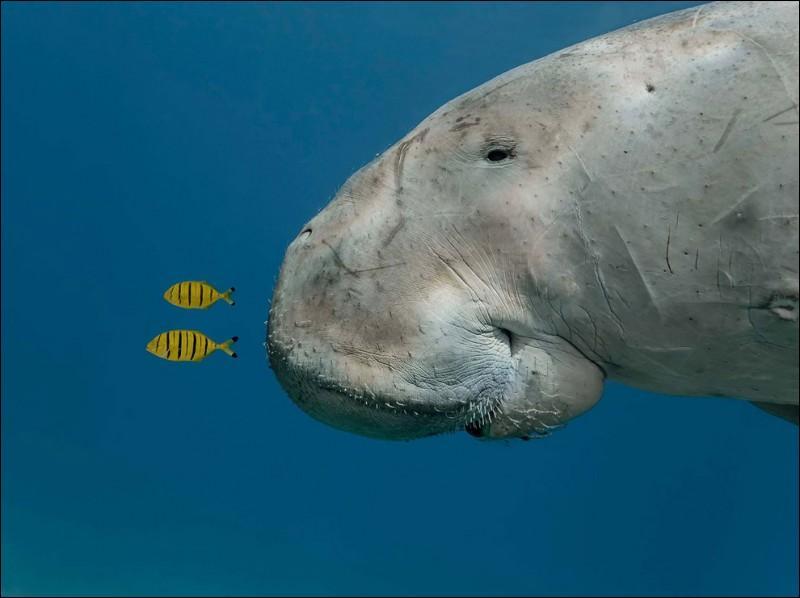 Cette baleine se nourrit de plancton !