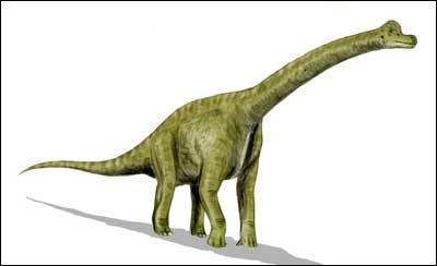 Ces trois grands dinosaures étaient :