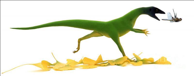 Quel était le plus petit dinosaure ?