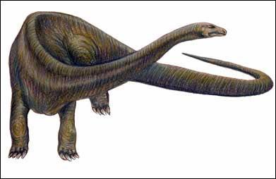 Quel était le moyen de défense du diplodocus ?