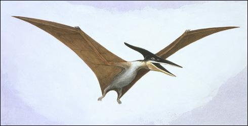 Les ptérosaures, capables de voler, étaient-ils des dinosaures ?