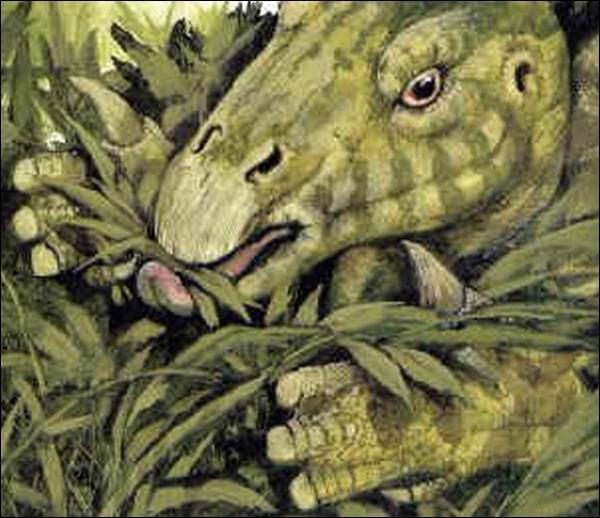 Les dinosaures étaient-ils tous carnivores ?