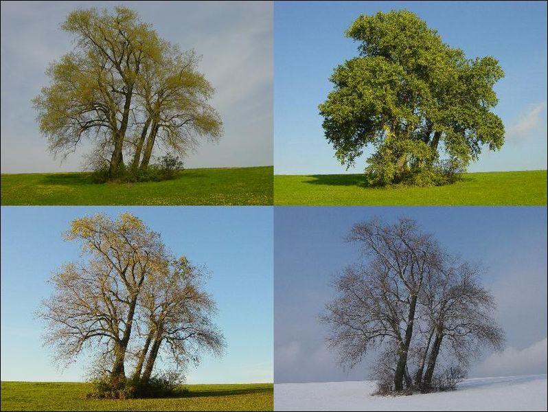 Qui a composé l'œuvre musicale les  Quatre saisons  ?