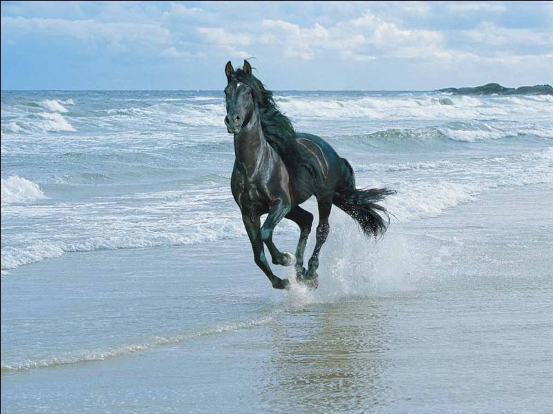 Chez les chevaux, une fois adulte, l'étalon a des canines !