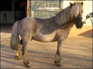 Faut-il faire marcher son cheval avant de le faire travailler ?