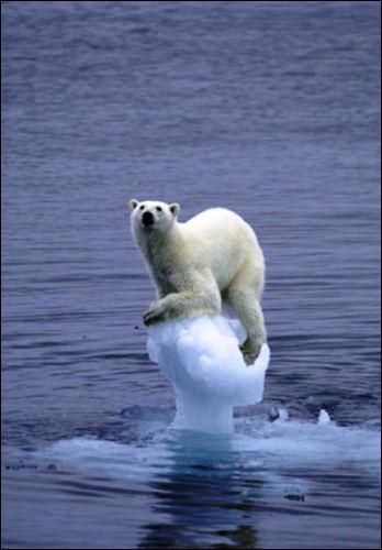 Nature - Où trouve-t-on la majorité des ours blancs ?