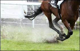 Citez une marque d'équitation :