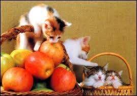 Ils sont  à croquer  ! Dans la Bible, le fruit défendu qui est mentionné dans le livre de la Genèse est une pomme :