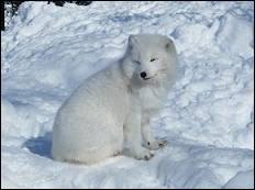 Il peuple nos forêts , il est de douze espèces différentes, il peut être roux, polaire, gris ... Qui est-il ?