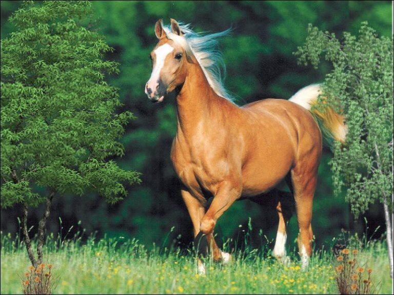 Le cheval fait partie de la famille des ...
