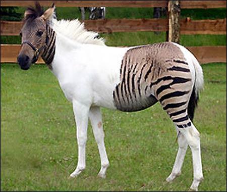 Quel est cet étrange animal?