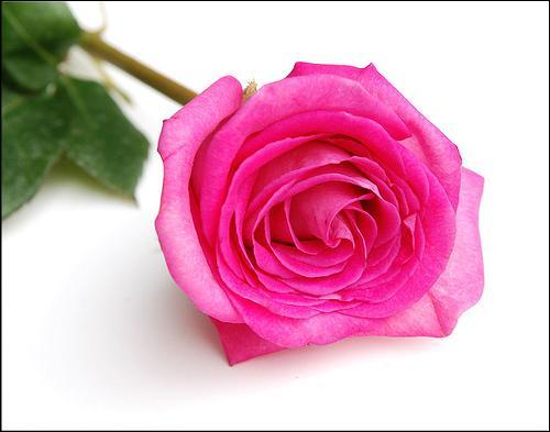 De quelle couleur est cette première rose ?