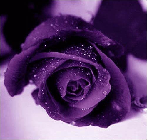 De quelle couleur est la sixième rose ?