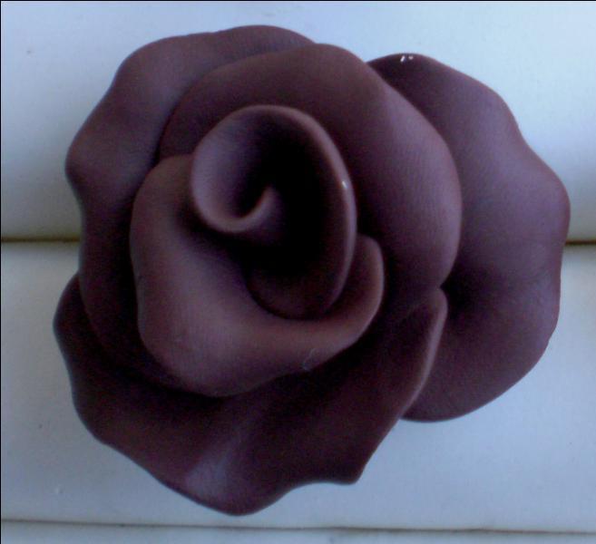 De quelle couleur est cette dernière rose ?