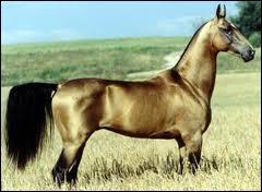 Et pour finir, de quelle race est ce cheval ?