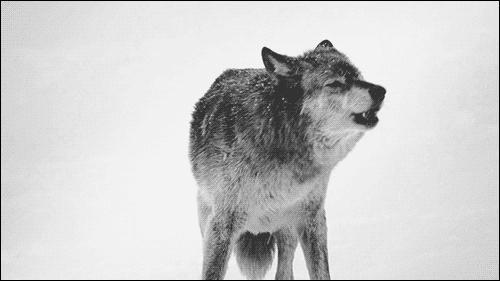 Dans quelle série/saga trouve-t-on des loups-garous ?
