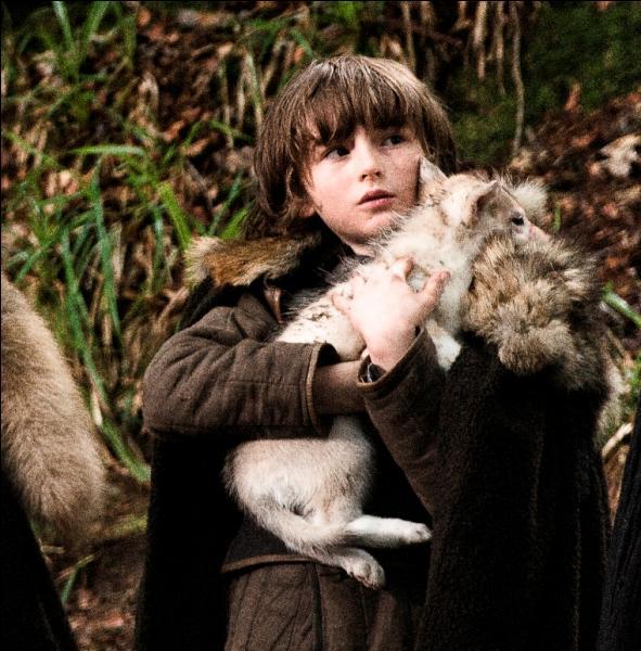 Comment s'appelle le loup de Bran ?