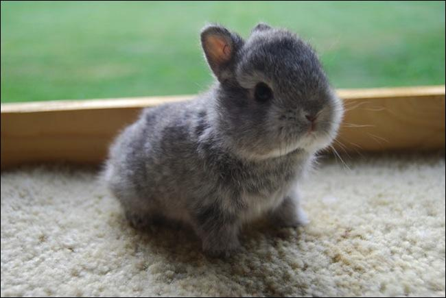 Pour quelle raison le lapin bouge-t-il sans arrêt son nez ?