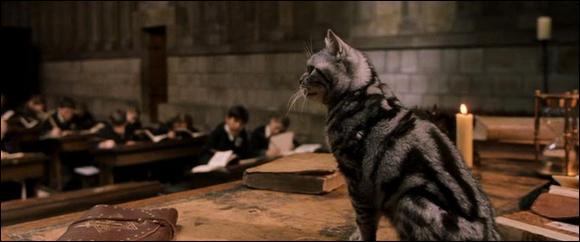Combien de sorciers figurent sur ce fameux registre, dont fait partie le professeur de métamorphose de Poudlard et directrice de la maison Gryffondor qui se prénomme Minerva McGonagall ?