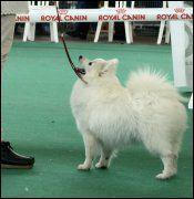 Quel est la race de ce chien?