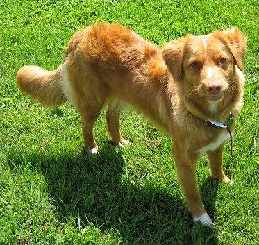 Connaissez-vous les races de chiens?