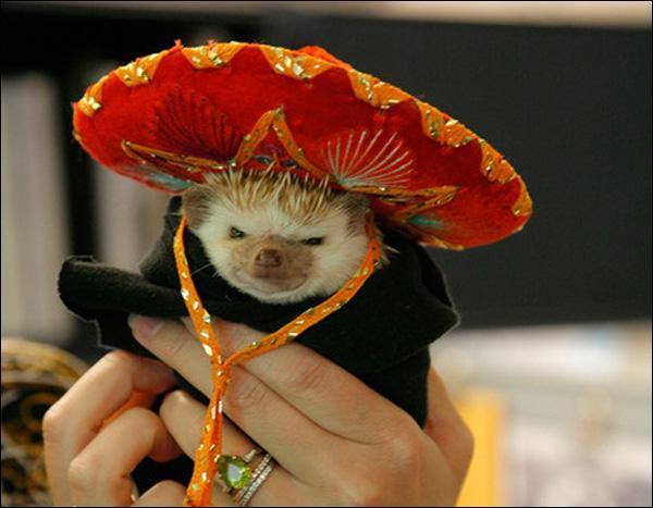 Est allongé sur le sol - Un sombrero sur le nez- En guise, en guise, en guise, de parasol !