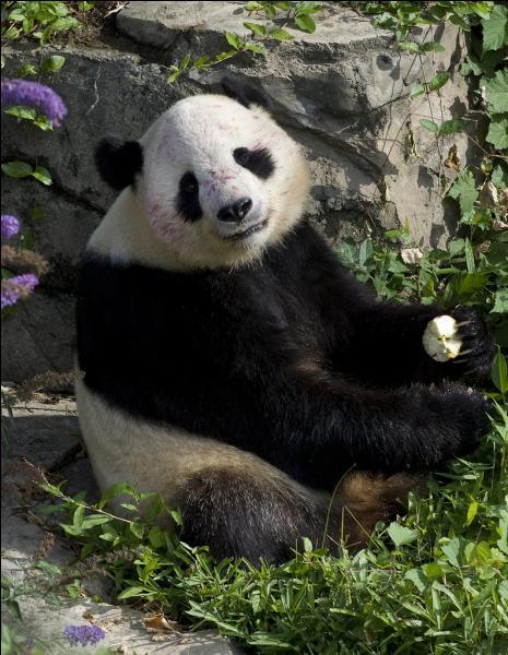 Bambou - Dans tes silences se dessinent ... Alain Chamfort !