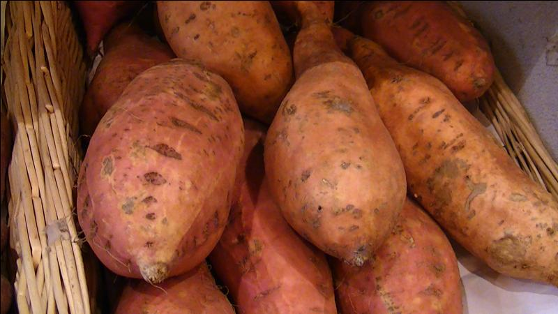 Joséphine de Beauharnais aimait tellement les patates douces qu'elle en fit pousser dans son jardin de la Malmaison.