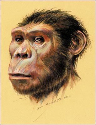 Australopithecus afarensis  est une espèce éteinte plus connue sous le nom de  Lucy .