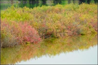 De quelle couleur est l'herbe dans un roman de Boris Vian ?
