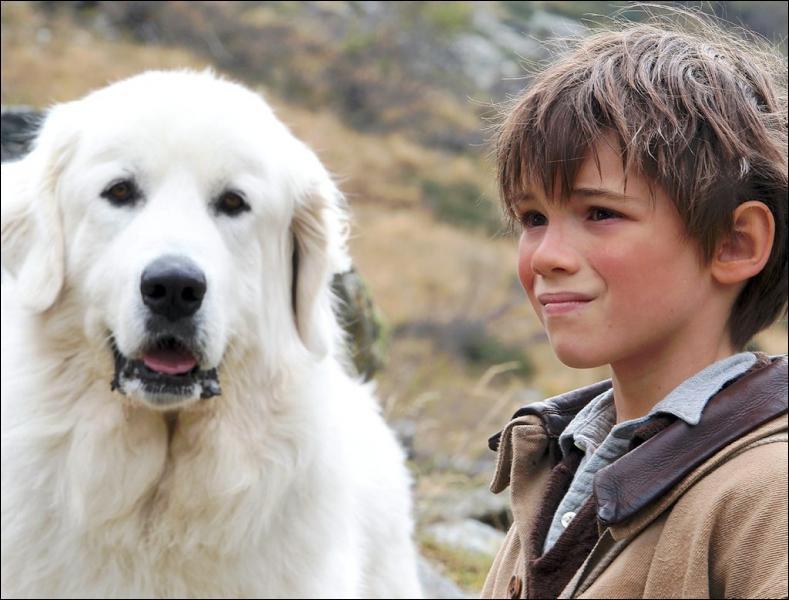Dans le film de Nicolas Vanier  Belle et Sébastien , quelle est la race du chien ?
