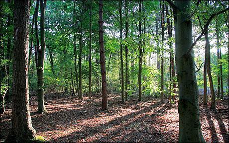 Affrontant les dures conditions de la vie du Moyen-Âge, Robin des Bois est bien décidé à échapper à ses ennemis. Dans quel site resté célèbre aurait-il trouvé refuge ?